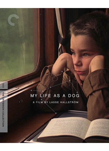 My Life As A Dog (Dvd)