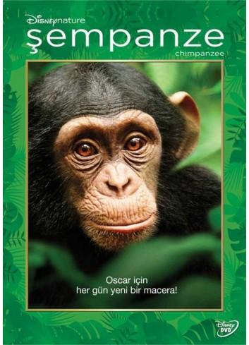 Şempanze (Dvd)